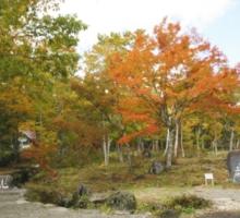 分水嶺 紅葉